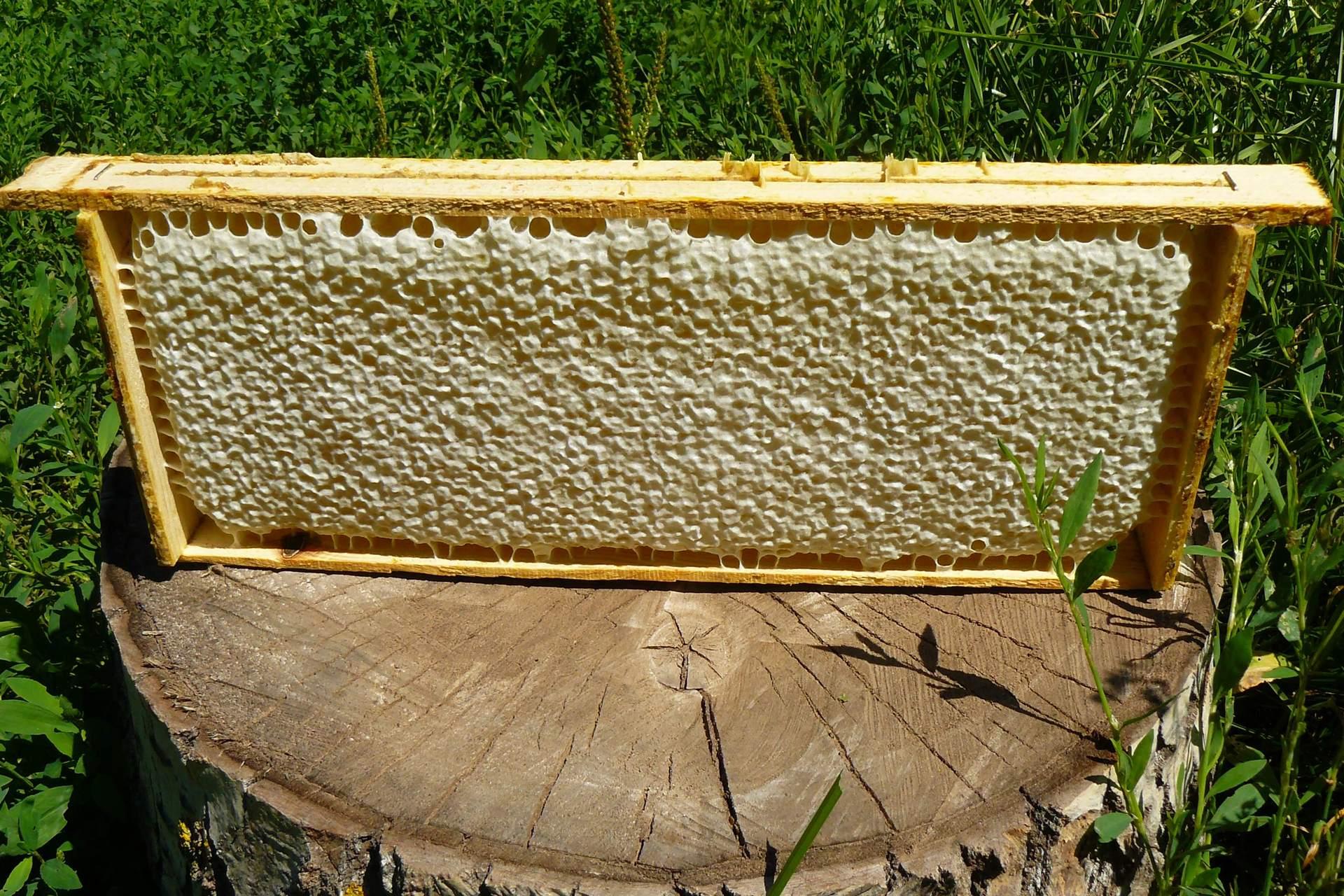 Мёд в сотах (полурамка)